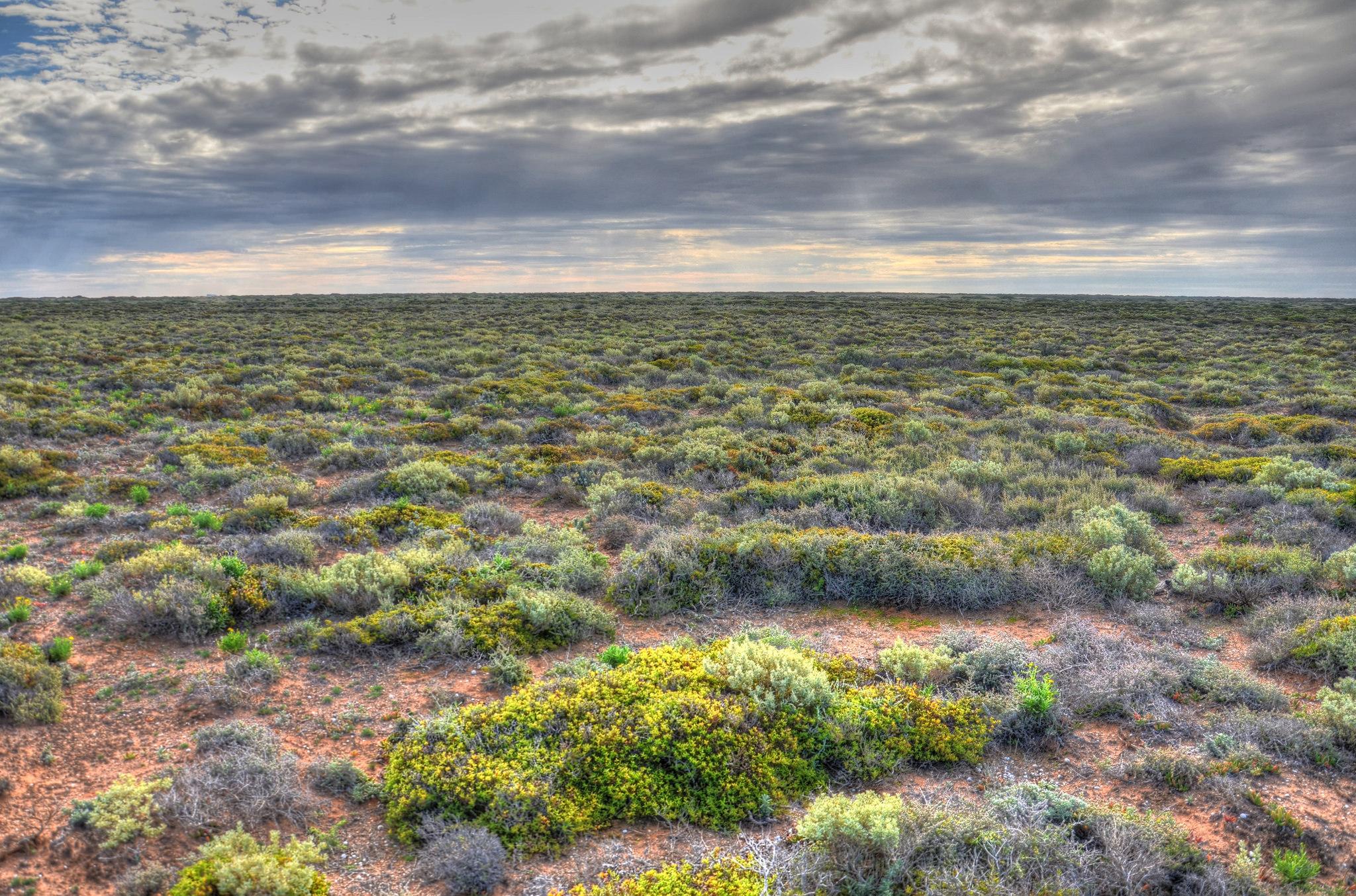 bromus dam rest area nullarbor plain